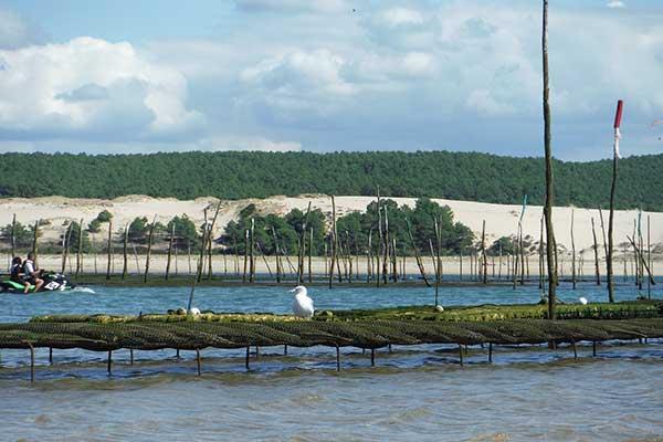 Aquaculture : bien se protéger des vols et dégradations avec Serelys Sécurtité